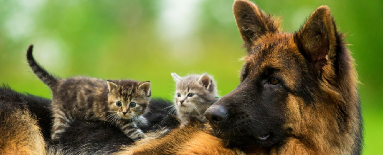 Photo of kittens and a dog