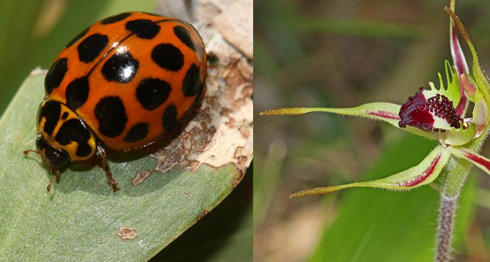 lady bird on a leaf and a local wild flower