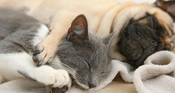 Photo of a cat and dog asleep together