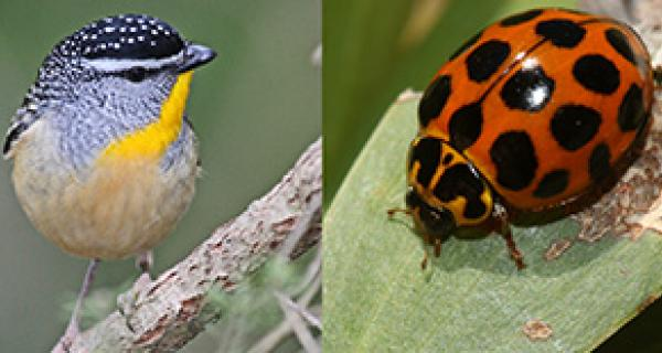 bird on a branch and lady bird on a leaf