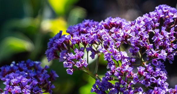 Purple flowers in sunshine