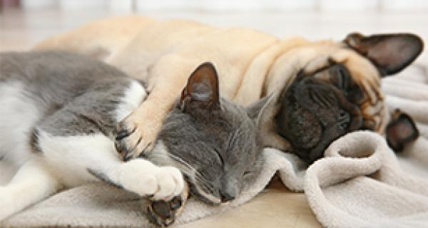 cat and dog asleep
