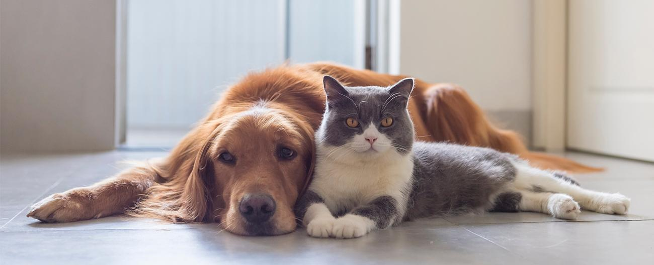 Cat and dog next to each other