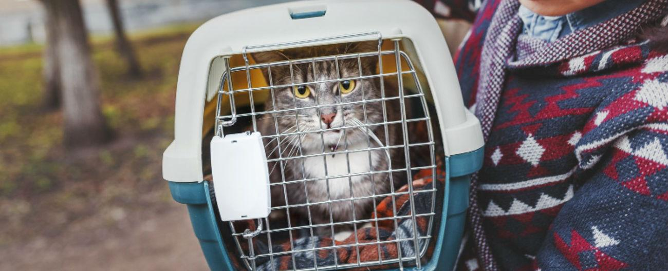 Photo of cat in domestic cat cage